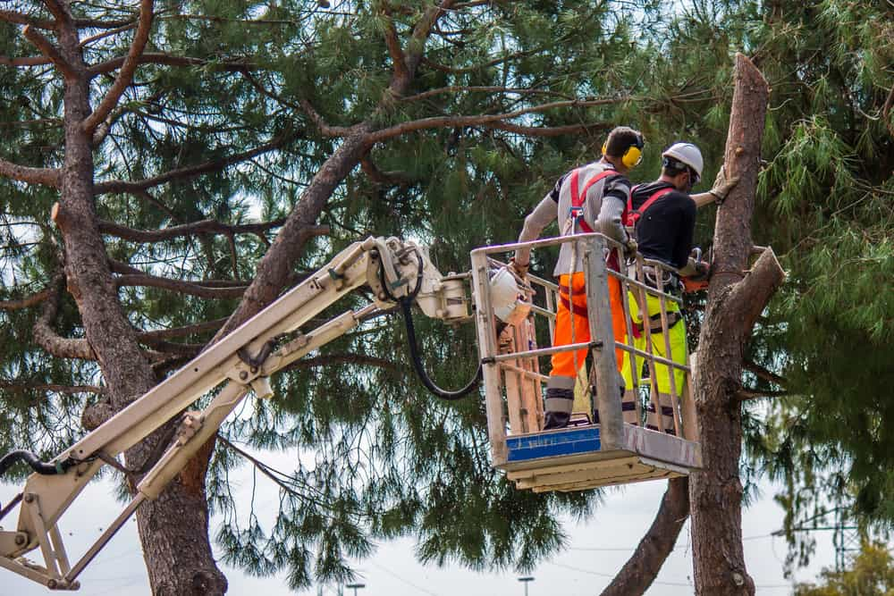 tree surgeon on a crane felling a tree in Bristol