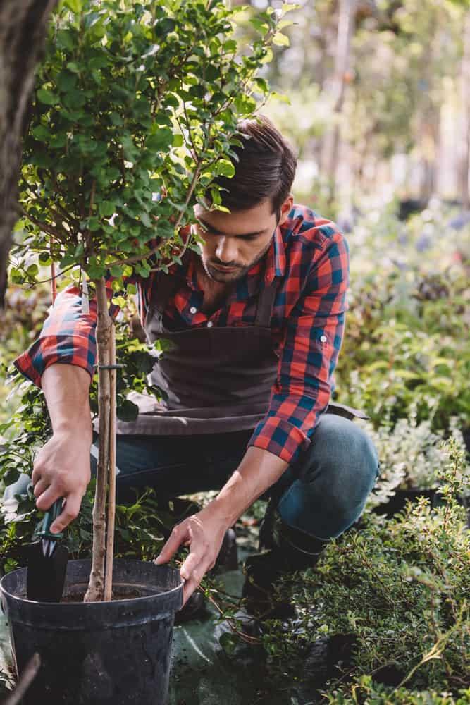 tree surgeon planting a tree