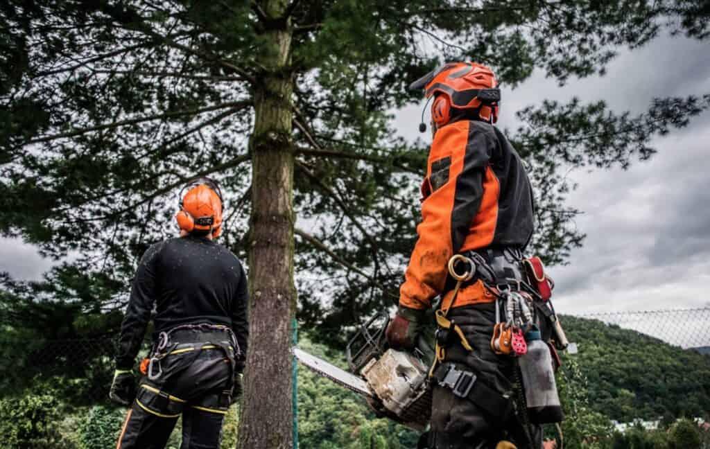 Tree surgeons removing a tree