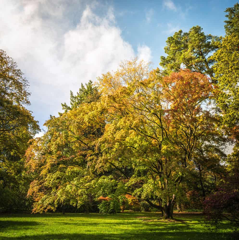 westonbirt-arboretum