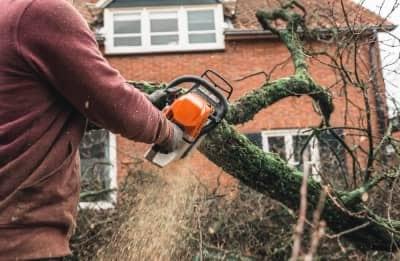 Bristol tree care