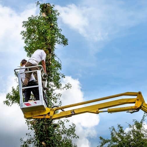 Tree Pruning Bristol